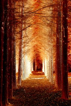 40 Fascinating Photographs Of Forest Paths To Another World - Bored Art Pretty Pictures, Cool Photos, Funny Pictures, Beautiful World, Beautiful Places, Trees Beautiful, Beautiful Forest, Tree Tunnel, Sunset Beach