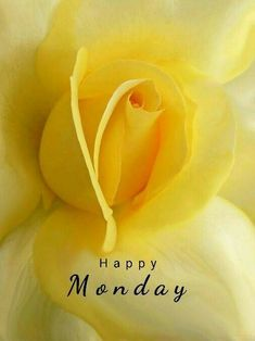 Have fun pinning! Good Morning Flowers, Good Morning Picture, Good Morning Good Night, Morning Pictures, Good Morning Wishes, Good Morning Images, Monday Morning Greetings, Monday Morning Quotes, Good Morning Happy Monday