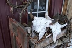 Cow skulls at Snake River Farm Minnesota, from One tomato, two tomato.