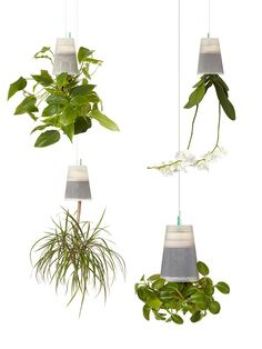 Hang your plants upside down! Sky planters are perfectly suited for plants with roots designed for sun exposure like orchids.
