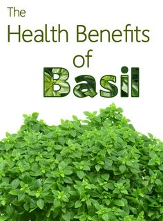 Health Benefits of Basil Let's take basil beyond its uses as a flavoring for tomato sauces and think about using it as a home remedy! http://livingawareness.com/health-benefits-basil/