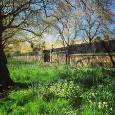 The insanely beautiful wildflower meadows outside @clarencehouse on London's Mall are about to reach their peak... Tulips, camassias, bluebells, cow parsley on its way.  Wouldn't guess you were in the centre of London!