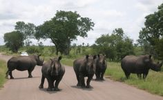 South Africa, Elephant, Park, Animals, Life, Animales, Animaux, Elephants, Parks