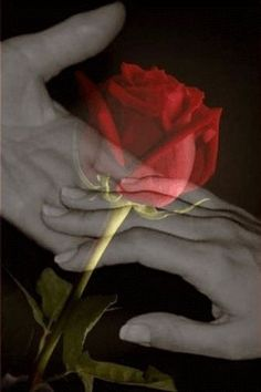 The undecipherable touch and transparent red rose of love . Beautiful Gif, Beautiful Roses, Romantic Pictures, Beautiful Pictures, Night Pictures, Animiertes Gif, True Love, My Love, Love Images