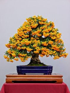 Bonsai trees can be sold at a vast price in the industry. Without the right size pot, a Bonsai tree cannot survive. Bonsai trees aren't grown for the aims of food manufacturing, medicinal uses, or for creating landscape.