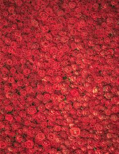 NeoBack Thin vinyl cloth New Born Baby Photography Backdrop children kids backdrops Printing Studio Photo backgrounds Red Rose Flower, Red Flowers, Red Roses, Background For Photography, Photography Backdrops, Photography Backgrounds, Wedding Photography, Valentine Backdrop, Flower Backgrounds