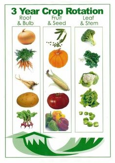 Simple crop rotation system for growing vegetables....