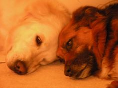 Some more Sleeping Beauties for our Pretty BIG Dog Photography Competition
