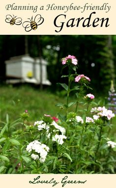 Planning a Honeybee-friendly Garden