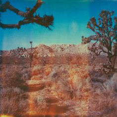 Rough, Psychedelic and Vintage Photography from the Portfolio of Neil Krug Vintage Photography, Art Photography, Desert Aesthetic, Desert Dream, Desert Sun, Fallout New Vegas, Lomography, Aesthetic Pictures, Wilderness