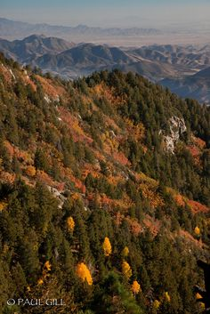 Mount Graham Fall-73.jpg | by paulgillphoto