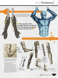 How to draw muscles and upper body