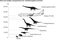 Newly Discovered Dinosaur 'Dreadnoughtus Schrani' Compared to Other Dinosaurs and a Boeing 737