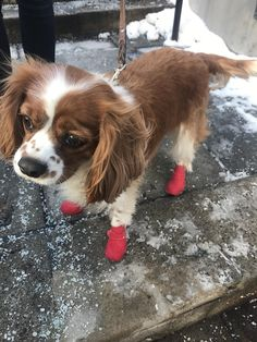 This guy has his boots on to handle the Chicago winter on NYE http://ift.tt/2CevXAy