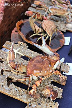 R. J. Oceans Crabs & Lobsters at the Florida Seafood Festival in Apalachicola, Florida | Oysters & Pearls