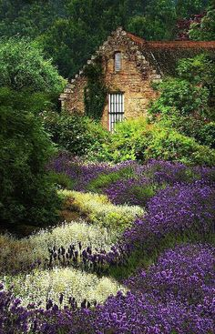 Cottage amidst the lavender in the highlands of Scotland - Cottage dans un champ de lavande en Écosse Beautiful World, Beautiful Gardens, Beautiful Places, Beautiful Gorgeous, Wonderful Places, Garden Cottage, Cozy Cottage, Forest Cottage, Fairytale Cottage