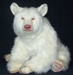 albino bear - Google Search