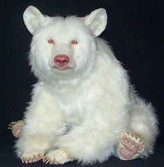 albino bear - Google Search