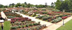 The beautiful Municipal Rose Garden in Tyler, Texas!