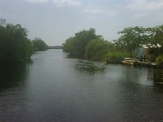 Going up the river to visit the crocodiles - Black River, St. Elizabeth, Jamaica