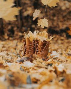 Autumn Cozy, Autumn Trees, Autumn Leaves, Autumn Fall, Autumn Photography, Creative Photography, Autumn Aesthetic, Hello Autumn, Fall Halloween