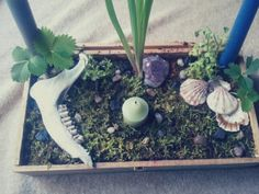 I made an altar thingy. Artemis: Strawberry plant, pansy, silver taper candle and the jaw bone of a doe who was found dead in one of our sheds. (We presume she was hit by a car and ran off to die there?) Gaia: Wild tulip or something? I've never seen...