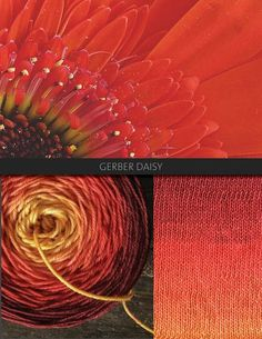 Gerber Daisy is bright and warm, transitioning from gold, to red, to deep red. The Blue Brick Ombré series is a collection of long-run gradient yarns, hand dyed to match photography, and objects from the natural world. This skein will ship with the photograph used as the main product image. Ombré yarns may be ordered in any of the bases listed below. Please note that these yarns are dyed-to-order, and that, from dyeing to delivery may take up to three weeks.      Killarney Sock 80/20…