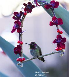 Little T, an Anna's male hummingbird enjoying his homemade swing.
