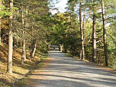Point Pleasant Park, Halifax NS.  Nothing better than a walk here with my hubby and the pups.