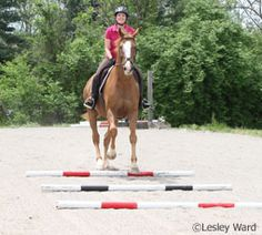 Better Jumping with Ground Pole Exercises~Liven up your flatwork with these ground pole exercises. Horse Exercises, Training Exercises, Training Tips, Dressage, Horse Riding Tips, Horse Tips, English Riding, Show Jumping, Horse Training