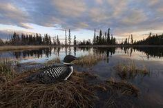 Advice from the Rising Star of Wildlife Photography — Vantage — Medium