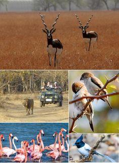 Gujarat Tour 8n/9d- Tours From Delhi - Custom made Private Guided Tours in India - http://toursfromdelhi.com/gujarat-tour-package-8n9d-mumbai-bhavnagar-velavadar-national-park-bhavnagar-sasan-gir-sayla-dasada-himmatnagar-udaipur/