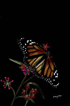 """Title: Butterfly.   Colored pencil on black paper, 6""""x9""""."""