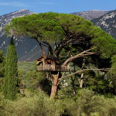 treehouse | the perfect treehouse | mosey