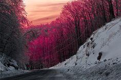 pink skies, raspberry treetops