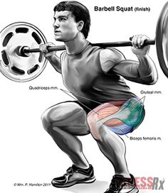 Crown Your Lower Body - With Squats, the King of Thigh Builders