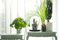 Lente hangt in de lucht en daarmee krijg ik altijd zin om de natuur in huis te halen. En zeg nou zelf: Een plant die niet alleen mooi is, maar ook nog eens gezond, daar zeg je toch geen nee tegen? Enter the Ogreen Clean Machines!