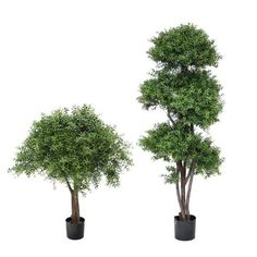 Pacific Silkscapes is here to help you select the perfect indoor or outdoor artificial topiary tree for your decor. Boxwood Tree, Topiary Trees, Artificial Topiary, Entrance Ways, Reception Areas, Ancient Art, Indoor Outdoor, Walls, Herbs