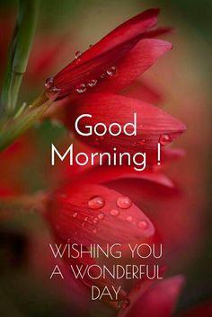 Good Morning Rain, Good Morning Animals, Good Morning Happy Monday, Good Morning Roses, Good Morning Prayer, Good Morning Picture, Good Morning Images Flowers, Good Morning Beautiful Images, Good Morning Images Hd