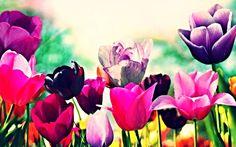 VIete ktoré parfémy obsahujú vôňu tulipánov?