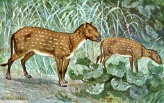 Hyracotherium Eohippus hharder - Odd-toed ungulate - Wikipedia, the free encyclopedia