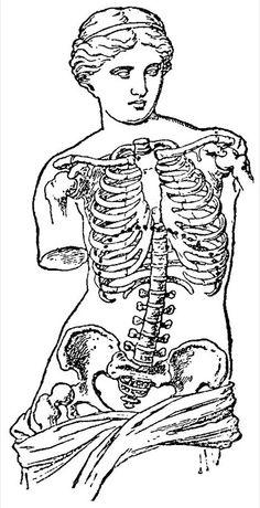Items similar to Venus de Milo, Old medical atlas illustration Digital Image, 017 on Etsy Tatoo Simple, Tattoo Drawings, Art Drawings, Art Tattoos, Handpoke Tattoo, Human Body Art, Human Figure Drawing, Arte Sketchbook, Anatomy Art