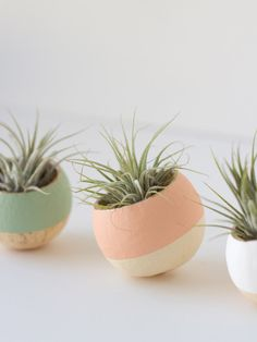 DIY Painted Air Plant Bell Cups via Lovely Indeed