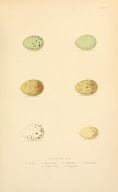 1894 - The smaller British birds : - Biodiversity Heritage Library