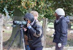 Kranichbeobachtungen auf den Feldern an der Müritz | Kranichbeobachtungen auf der Malreise in den Müritz Nationalpark (c) FRank Koebsch (4)