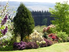The middle terrace is in full bloom - May 17