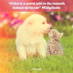 [ 😽😘 ] It's International Kissing Day! Follow their leads! #kiss #internationalkissingday #bisous #xoxo #kissday #cat #cats #puppy #cute #socialmedia #socialmediamanager #quote #kittyquote #kitty #socialmediamarketing