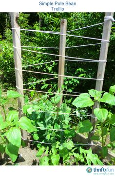 Our kids planted pole beans this year and we needed a simple trellis for the beans to grow on. My husband found some pieces of 2x2 wood, leftover from another project, and cut 3 pieces to the same length.