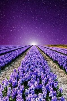 Lovin These Gorgeous Purple Flowers With The Beautiful Sky Moon Stars Field Of