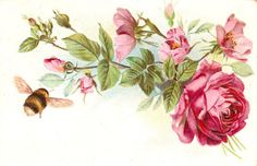 Vintage bee and antique roses